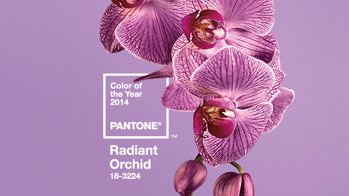 Цвет 2014 Radiant Orchid